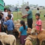 Proyecto rotativo de ganado y de hortaliza